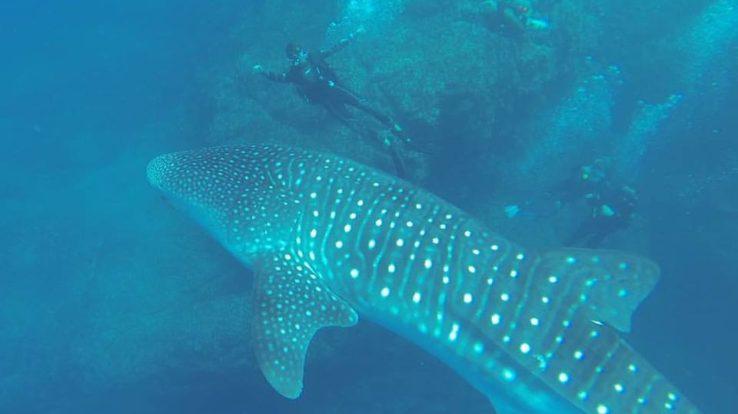 Diving In Tamarindo