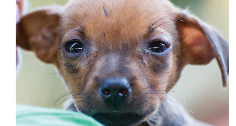 Community Event – Tamarindo Dog Day