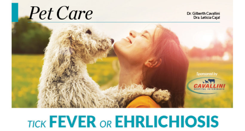 Pet Care – Tick fever or Ehrlichiosis