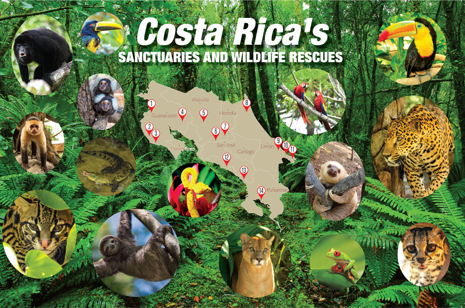 Costa Rica Sanctuaries And Wildlife Rescues Map Howler Magazine The Heart Of Costa Rica The