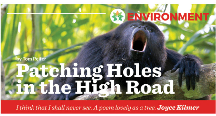 Environment – Patching Holes in the High Road