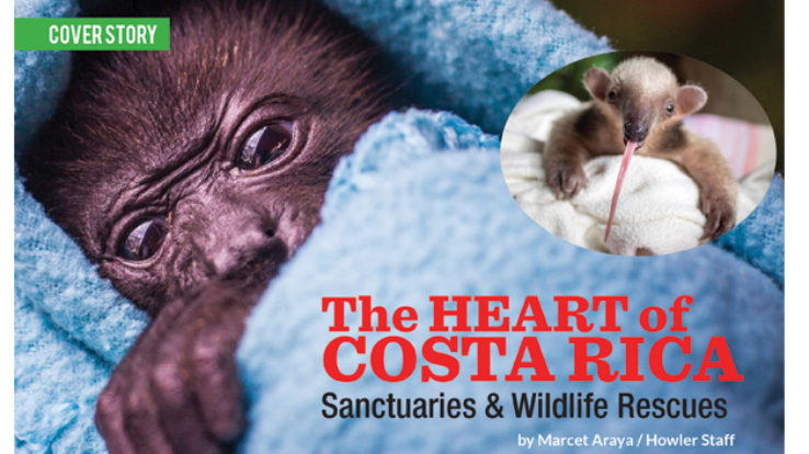 Cover Story – The Heart of Costa Rica: Sanctuaries and Wildlife Rescues