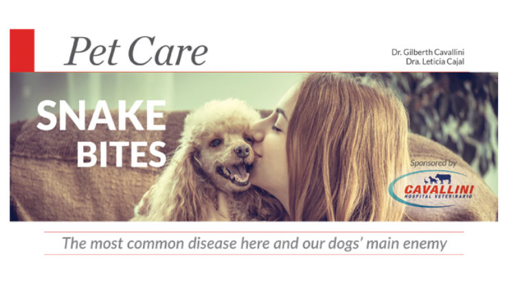 Pet Care – Snake Bites, A common summer emergency