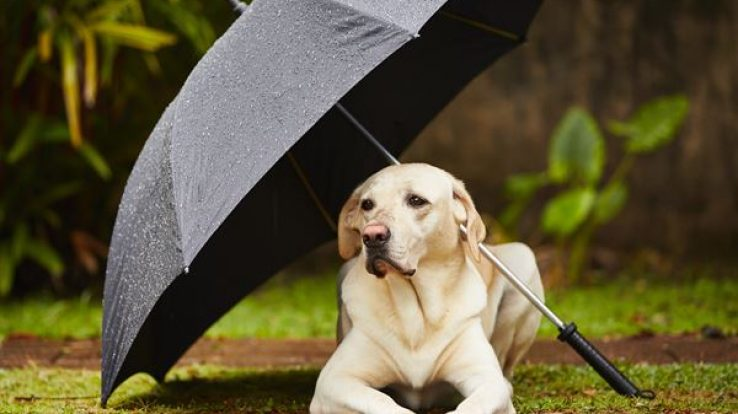 Pet Care – Let's Prepare Our Pets for Rainy Season