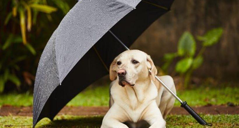 Pet Care – Let's Prepare Our Pets for Rainy Season