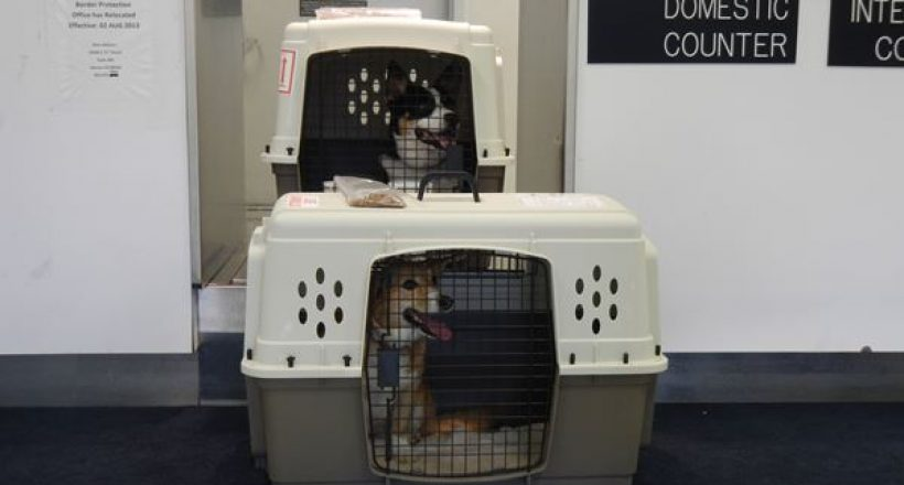 Pet Care – Happy Landings for Your Pet II