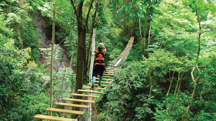 Sky Bridge Tour Rainforest Adventures