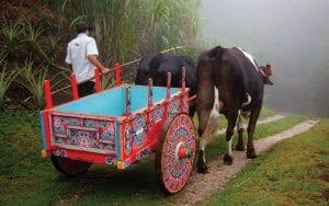 ox-car-bygone-costa-rica