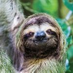 Best place to see sloths in Costa Rica is Manuel Antonio